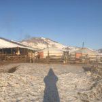 冬のモンゴルの仕事
