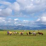 乗馬で90kmを駆けるテント泊ツアーの「大草原を爆走する!乗馬トレッキングツアー6日間(テント泊)」に参加しました。