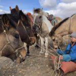 7/15まで外国人の入国禁止措置を延長。モンゴル新空港開講日を10/1に延期か